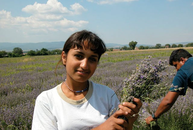 Click on video demonstrate about LAVENDER FROM BULGARIA